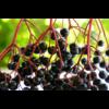 Kép 5/7 - Gyerekerő 5 féle bogyós gyümölcs koncentrátuma spirulina algával, 230g